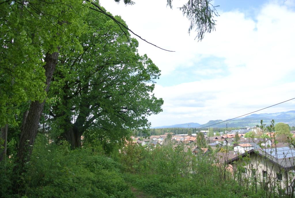 Lindenhubel